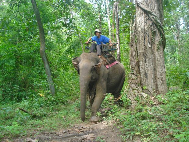 elefante en la selva-de-umhpang