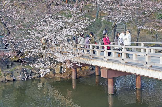 Sakura en Nara