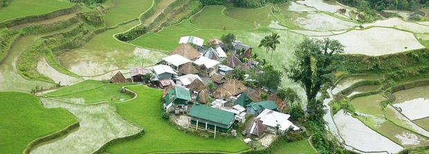 Terrazas-de-arroz