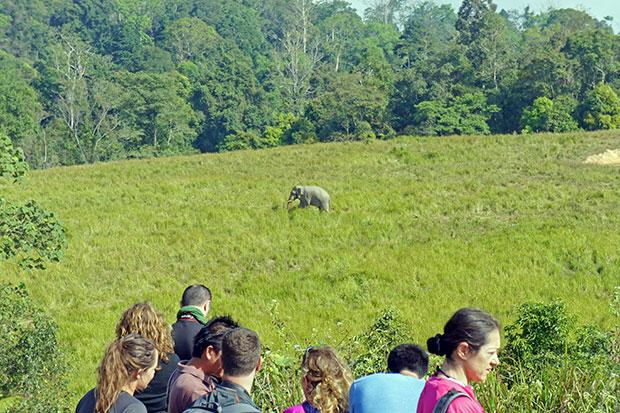 Viendo-al-elefante