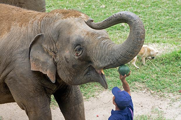 Alimentando-al-Elefante-Chiang-Mai