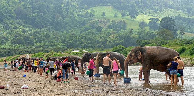 Bañando-al-elefante