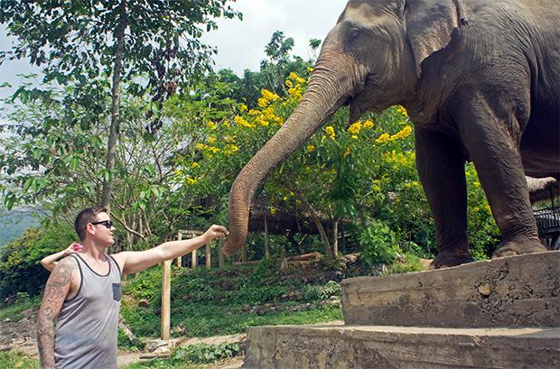 Elefante-tailandés-Chiang-Mai