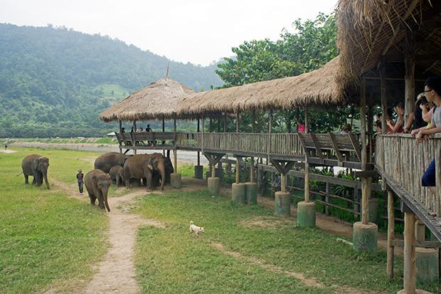 Instalaciones-Elephants-Nature-Park