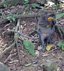 Mono-del-Parque-de-Khao-Sok