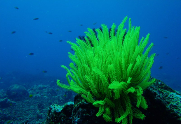 Algas-marinas