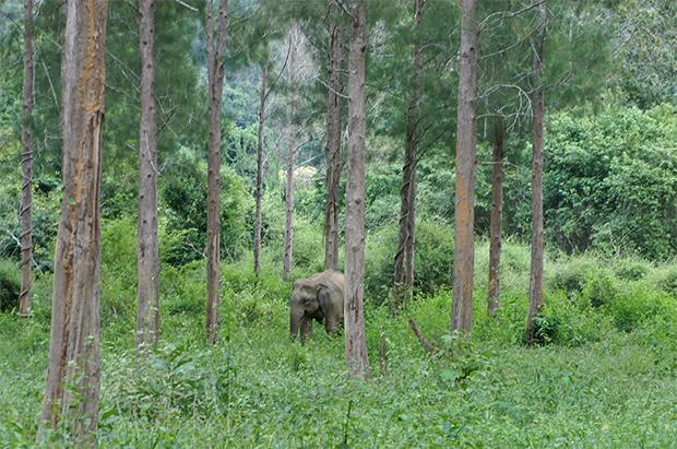 elefantes-kui-buri-2