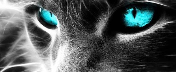 ¿Los gatos pueden ver o percibir entidades fantasmales?