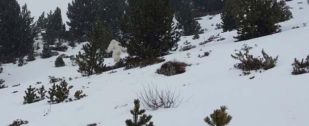 Esquiadores aseguran haber visto al Yeti en el Pirineo Aragonés
