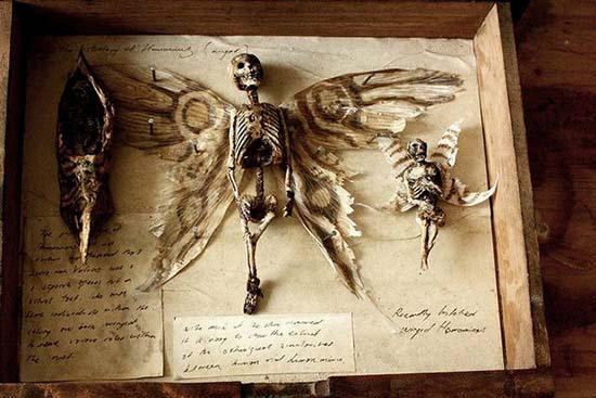 corps de créatures étranges londres - corps de créatures étranges trouvés dans le sous-sol d'une vieille maison londonienne