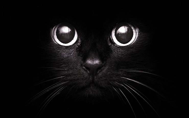 gatos protectores hogar 1 - Los gatos: protectores del hogar, de la energía negativa y los malos espíritus