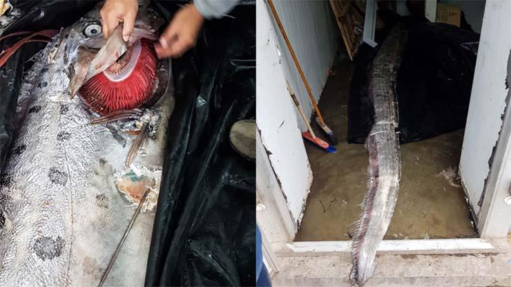 Alerta en Chile por la aparición de una criatura marina