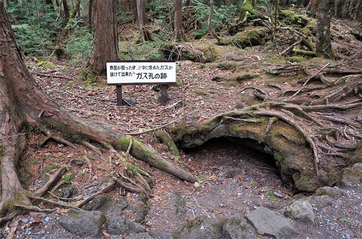 Aokigahara Suicide Forest - Rencontres paranormales à Aokigahara, la forêt du suicide du Japon