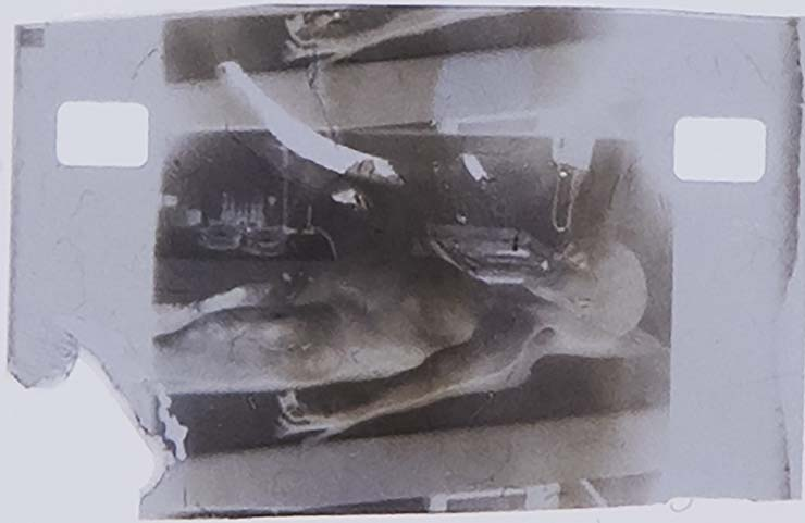 Autopsie extraterrestre de 1947 - La célèbre photo d'autopsie extraterrestre de 1947 mise aux enchères pour 1 million de dollars