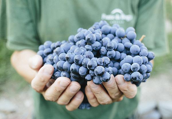 uvas-autóctonas-ribeira-sacra