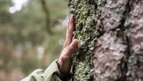 Cabreiroá y WWF España restaurarán un paisaje gallego afectado por incendios