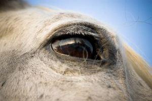 Ojo caballo
