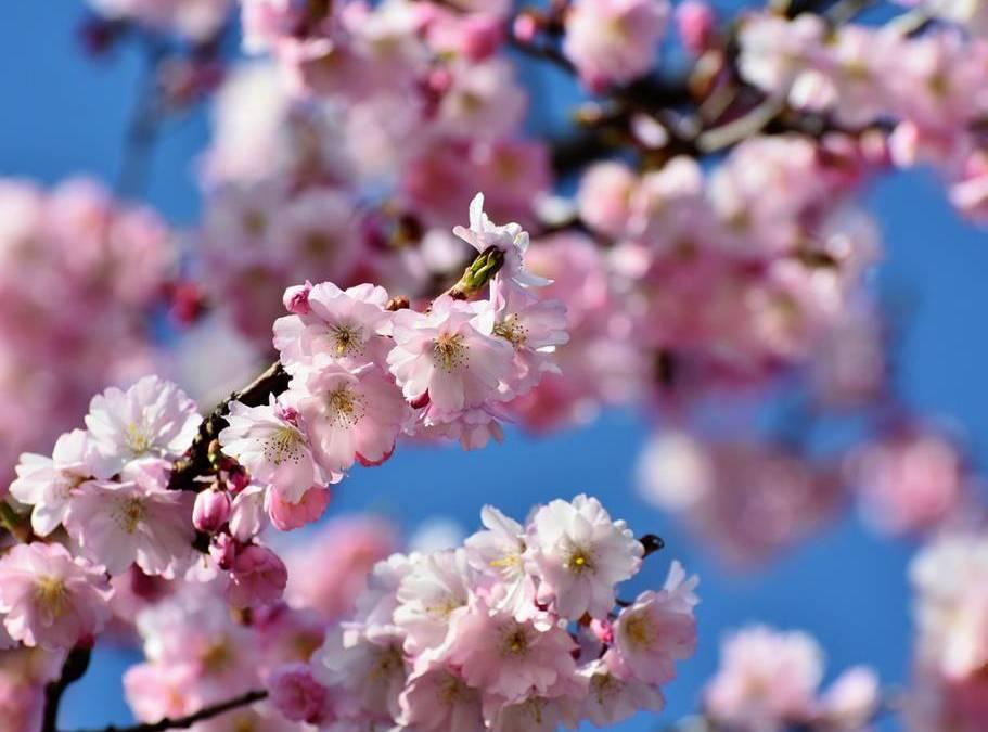 Doña primavera, poema de Gabriela Mistral