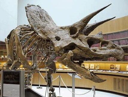 Foto 1: Esqueletos de dinosaurios