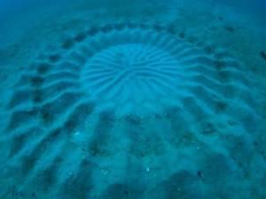 Círculo 'de la cosecha' bajo el agua descubierto en la costa de Japón