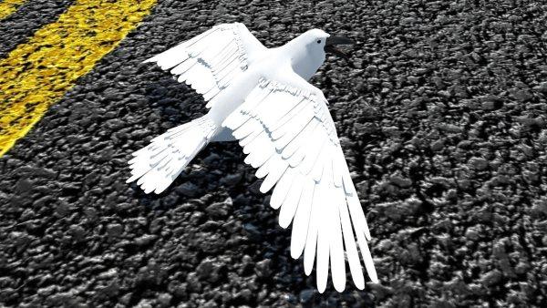 Solo Hace Falta un Cuervo Blanco…