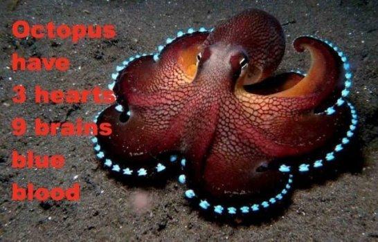 Los científicos dicen que Octopus Is Alien Creature, ADN lo confirma