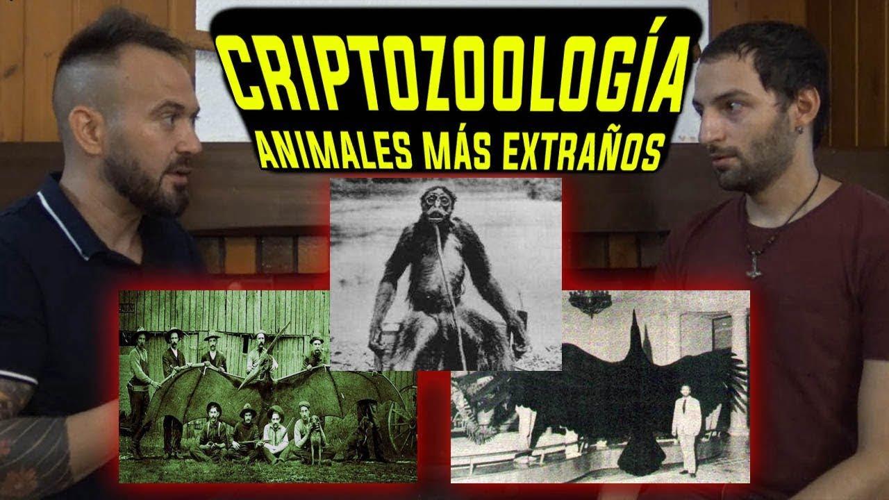 CRIPTOZOOLOGÍA Los animales más extraños y censurados del mundo