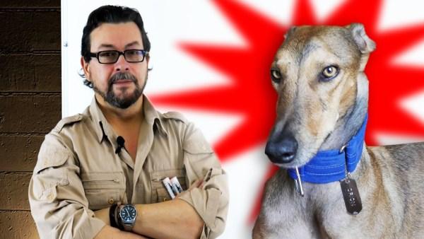 Los Perros y Gatos ven Seres Invisibles para Nosotros