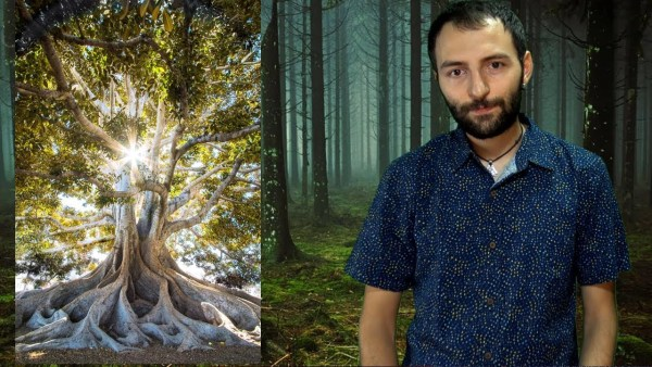 ¿Existe un superorganismo que vampiriza los árboles del planeta?