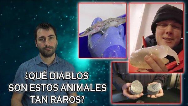 Descubren Cosas Increíbles y Animales Nunca Vistos Bajo el Hielo de la Antártida