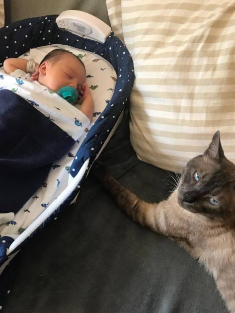 gatos e bebes