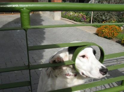 Mordidas de cachorro