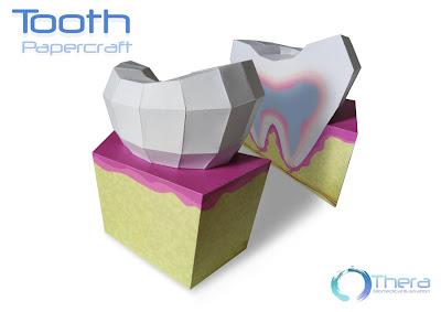 Tooth Papercraft