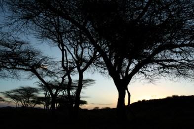 Savana - Quênia