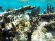 Reserva Marinha de Hol Chan e Shark Ray Alley - Belize
