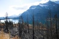 Floresta queimada no PN Glaciar