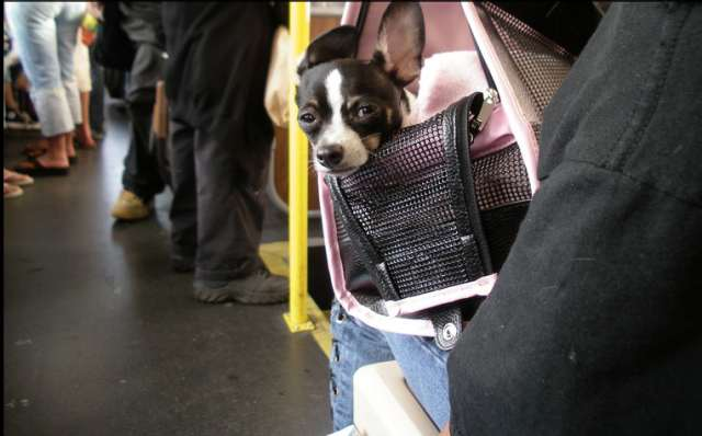 muni cute dog