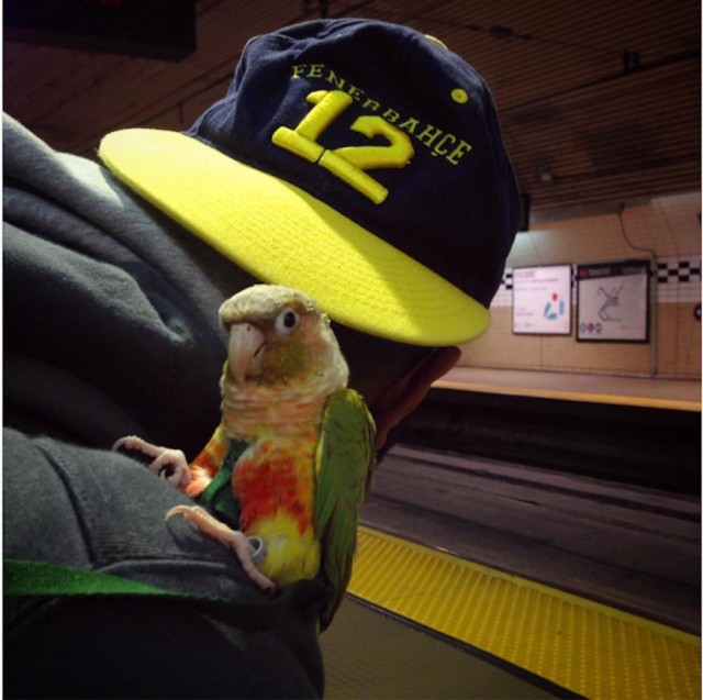 bird man on muni