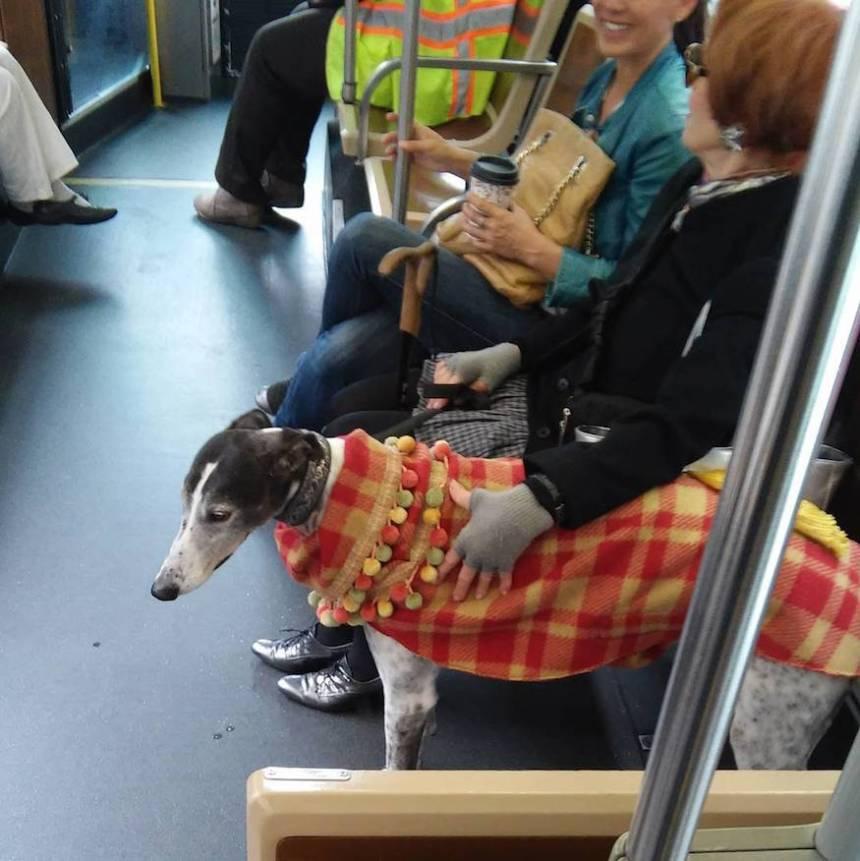 greyhound on muni