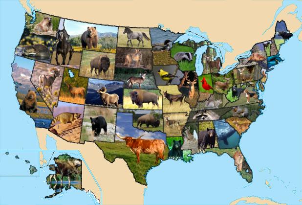 state animals