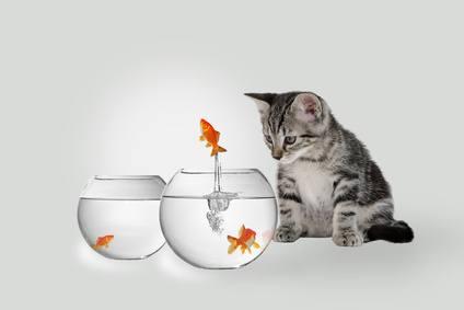 Vier Gründe, um ein Haustier zu Hause zu haben