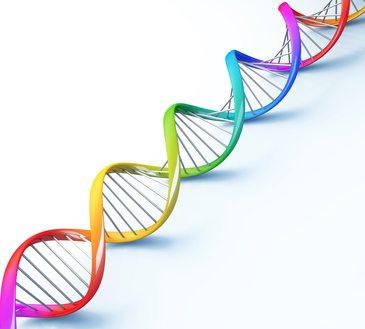 Chromosome Fragile X-Syndrom (Martin Bell Syndrom)