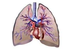 Die Beziehung zwwischen Lunge und Darm mit der Naturmedizin