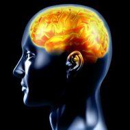 Hypothalamus reguliert den Appetit, Temperatur und mehr