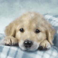 Kortti labradorinnoutaja