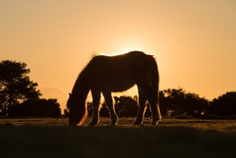 Sundown-Grazing