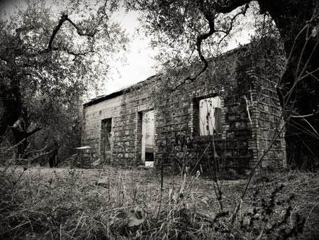 Abandoned shed in Italian olive grove