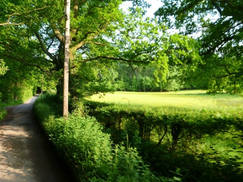 Quiet lane passes into the distance under trees next to a springtime field