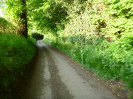 Single track road follows hedgerows into leafy woodland