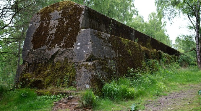 Three-quarter view of a large, overgrown wall in a woodland